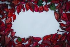 Bloemblaadjes van rode rozen op een witte achtergrond royalty-vrije stock fotografie