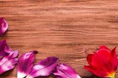 bloemblaadjes van tulp op de houten achtergrond Royalty-vrije Stock Afbeeldingen