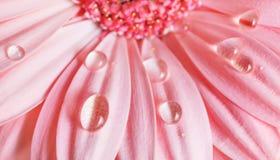 Bloemblaadjes, waterdalingen royalty-vrije stock foto's
