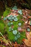 Bloembladeren op mos en bruine de herfstbladeren Royalty-vrije Stock Foto