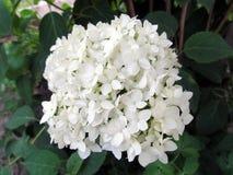Bloembloei in de tuin Royalty-vrije Stock Fotografie