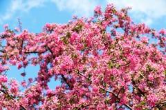 Bloembloei op boom op blauwe hemel Stock Afbeeldingen