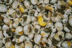 Bloembollen in een doos Tulp bij markt Stock Afbeelding