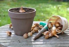 Bloembollen in tuin Royalty-vrije Stock Afbeelding
