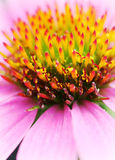 Bloemen 10 royalty-vrije stock afbeelding