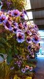 Bloemen 2 Stock Fotografie