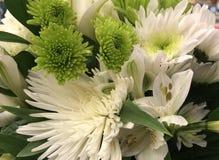 Bloemen royalty-vrije stock afbeelding
