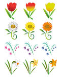 Bloemen. Stock Afbeeldingen