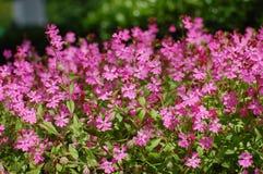 Bloemen Stock Afbeelding