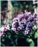 Bloemen Royalty-vrije Stock Fotografie