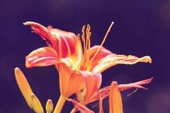 Bloemen Stock Fotografie
