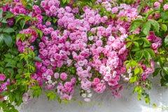 Bloemen Stock Afbeeldingen