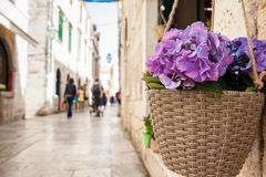 Bloemen aan het begin van de lente in de stegen van de oude stad van Dubrovnik royalty-vrije stock afbeelding