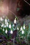 Bloemen in aard Royalty-vrije Stock Afbeelding