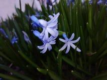 Bloemen, aard, mooie mening Royalty-vrije Stock Afbeelding