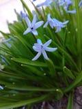 Bloemen, aard, mooie mening Royalty-vrije Stock Foto