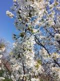 Bloemen, aard, mooie mening stock afbeelding