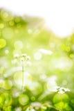 Bloemen abstracte achtergrond Royalty-vrije Stock Foto