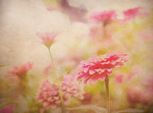 Bloemen Abstracte Achtergrond Stock Afbeeldingen