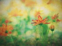 Bloemen Abstracte Achtergrond Stock Foto