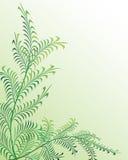 Bloemen abstracte achtergrond. Vector. Royalty-vrije Stock Fotografie