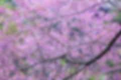 Bloemen Abstracte onscherpe achtergrond Royalty-vrije Stock Afbeelding