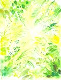 Bloemen achtergrond 1 Royalty-vrije Stock Fotografie