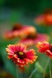 Bloemen Achtergrond 3 Stock Afbeeldingen