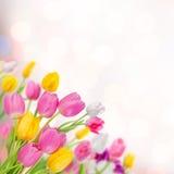Bloemen achtergrond 04 Stock Afbeelding