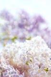 Bloemen achtergrond Stock Afbeelding