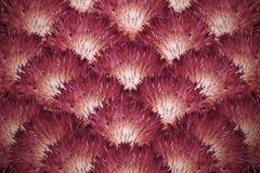 Bloemen achtergrond Een boeket van rood-oranje pluizige chrysanten De samenstelling van de bloem Stock Fotografie