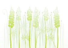 Bloemen achtergrond, lupine Stock Foto's