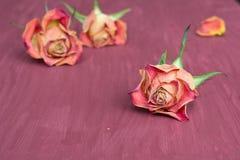 Purpere bloemenachtergrond met rozen Stock Afbeelding