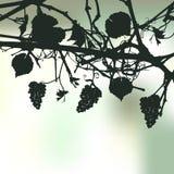 Bloemen achtergrond met druiven stock illustratie