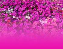 Bloemen achtergrond met exemplaar-ruimte Royalty-vrije Stock Foto