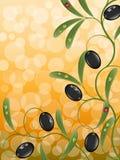 Bloemen achtergrond met olijftak Stock Afbeeldingen