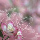 Bloemen achtergrond met orchideeën Royalty-vrije Stock Fotografie