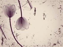 Bloemen achtergrond met tulpen Stock Afbeelding