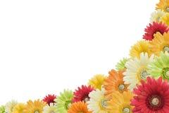 Bloemen achtergrond op wit Royalty-vrije Stock Afbeelding