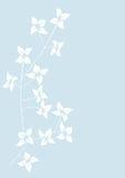 Bloemen achtergrond, weide Royalty-vrije Stock Foto