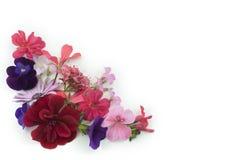Bloemen achtergrondhoekelement Stock Foto