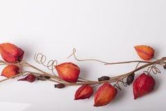 Bloemen als decoratiebehang Royalty-vrije Stock Fotografie