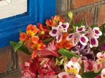 Bloemen Alstroemeria dichtbij de muur thuis Stock Afbeeldingen