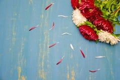 Bloemen Astra op een heldere achtergrond Stock Afbeelding
