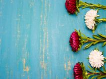 Bloemen Astra op een heldere achtergrond Royalty-vrije Stock Afbeelding