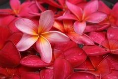 Bloemen bad Royalty-vrije Stock Afbeeldingen