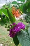 Bloemen in Bangladesh de clubgebied van de jatiopers royalty-vrije stock foto's