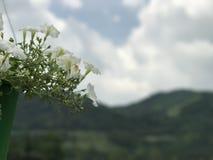 Bloemen in berg Royalty-vrije Stock Fotografie
