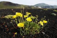 Bloemen in berg Stock Foto