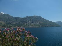 Bloemen, bergen en de baai van Kotor ` s Kotorstad, Montenegro stock fotografie